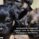 Do Border Terriers Shed? Tips To Prevent Excessive Shedding