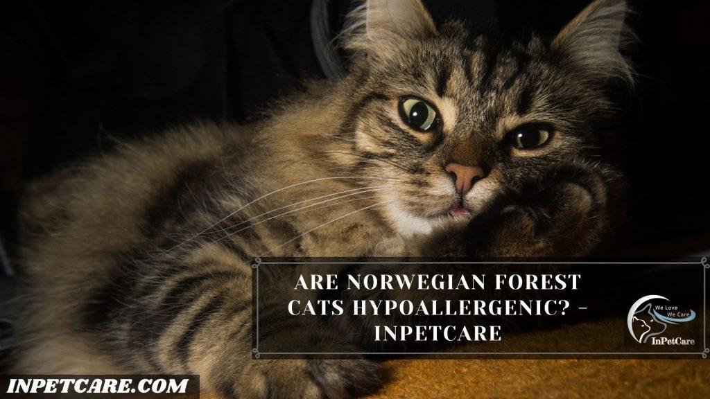 Are Norwegian Forest Cats Hypoallergenic?