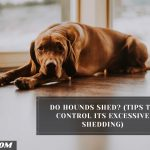 Do Hounds Shed? (Tips To Control Its Excessive Shedding)