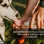 Are Huskies Hypoallergenic? Tips For Families With Allergies