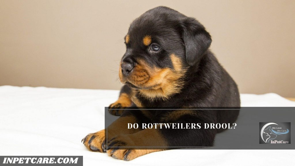 Do Rottweilers Drool?