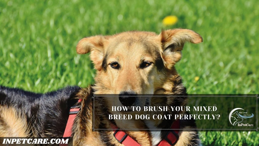 How To Groom A Mixed Breed Dog?