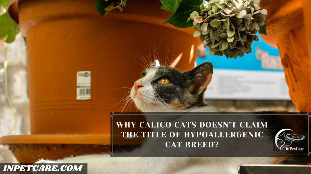 Are Calico Cats Hypoallergenic?