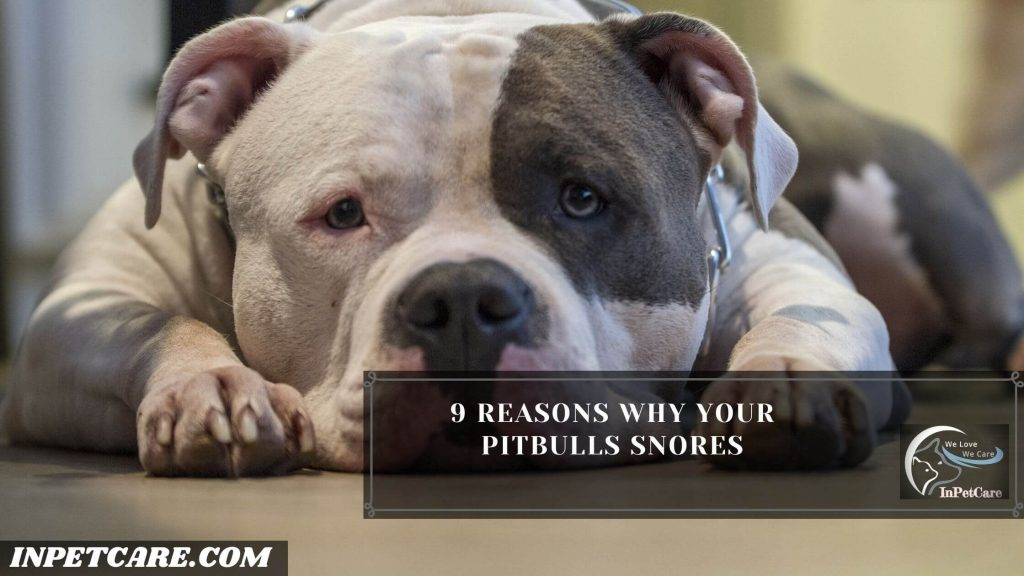 Why Do Pitbulls Snore?