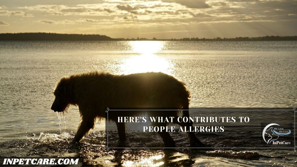 Here's What Contributes To People Allergies