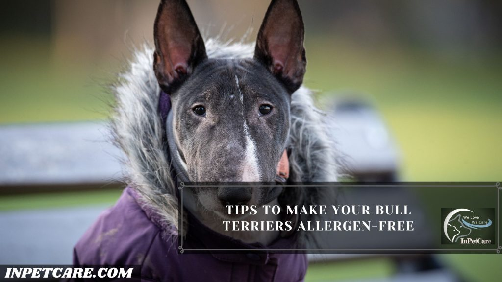 Are Bull Terriers Hypoallergenic?