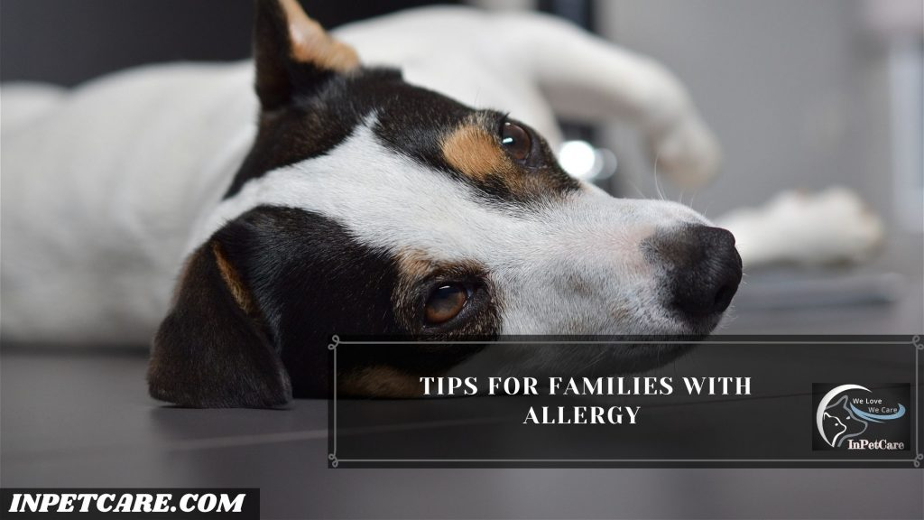 Are Jack Russell Terriers Hypoallergenic?