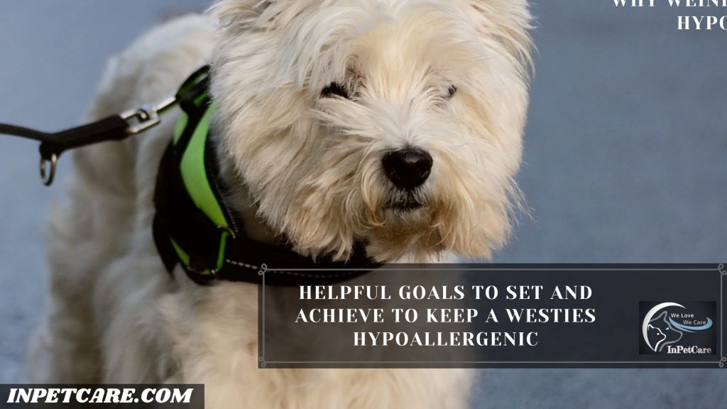 Are Westies Hypoallergenic? Tips For Families With Allergies