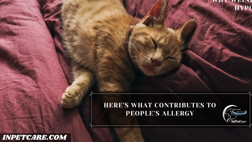 Are Tabby Cats Hypoallergenic?