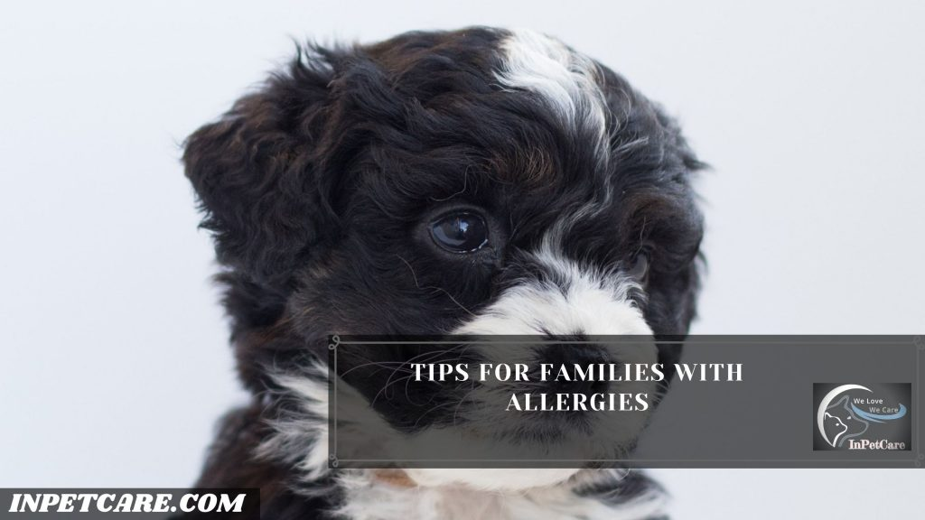Is Bernedoodles Hypoallergenic? Tips For Family With Allergy