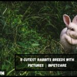 11 Cutest Rabbits Breeds With Pictures