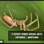 9 Cutest Spider Species (With Pictures) | InPetCare