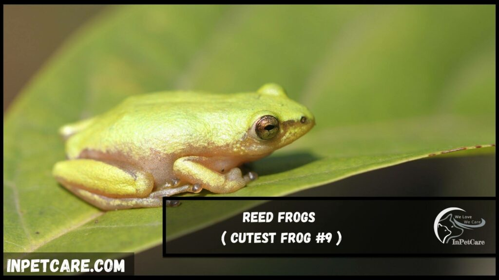 9 Cutest Frog Species With Pictures