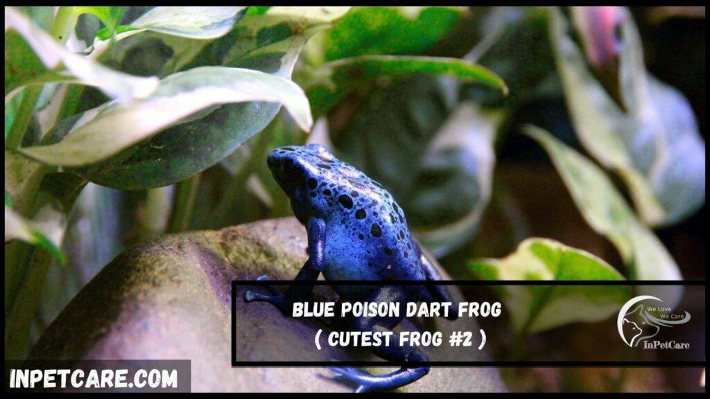 cutest frog species, cute frog species,