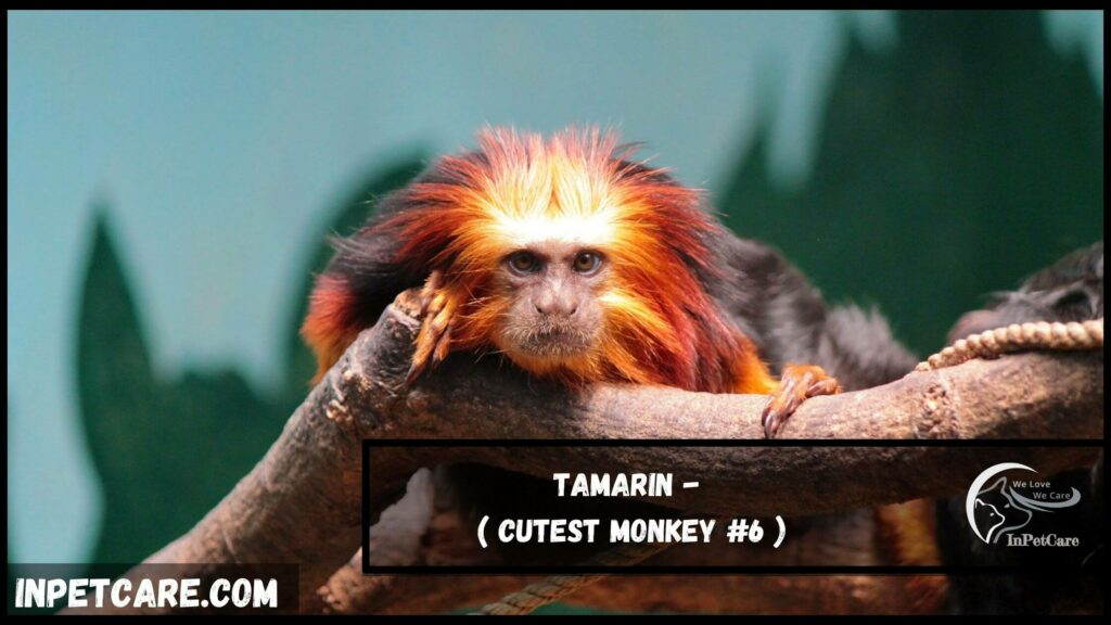9 Cutest Monkey Breeds With Picture