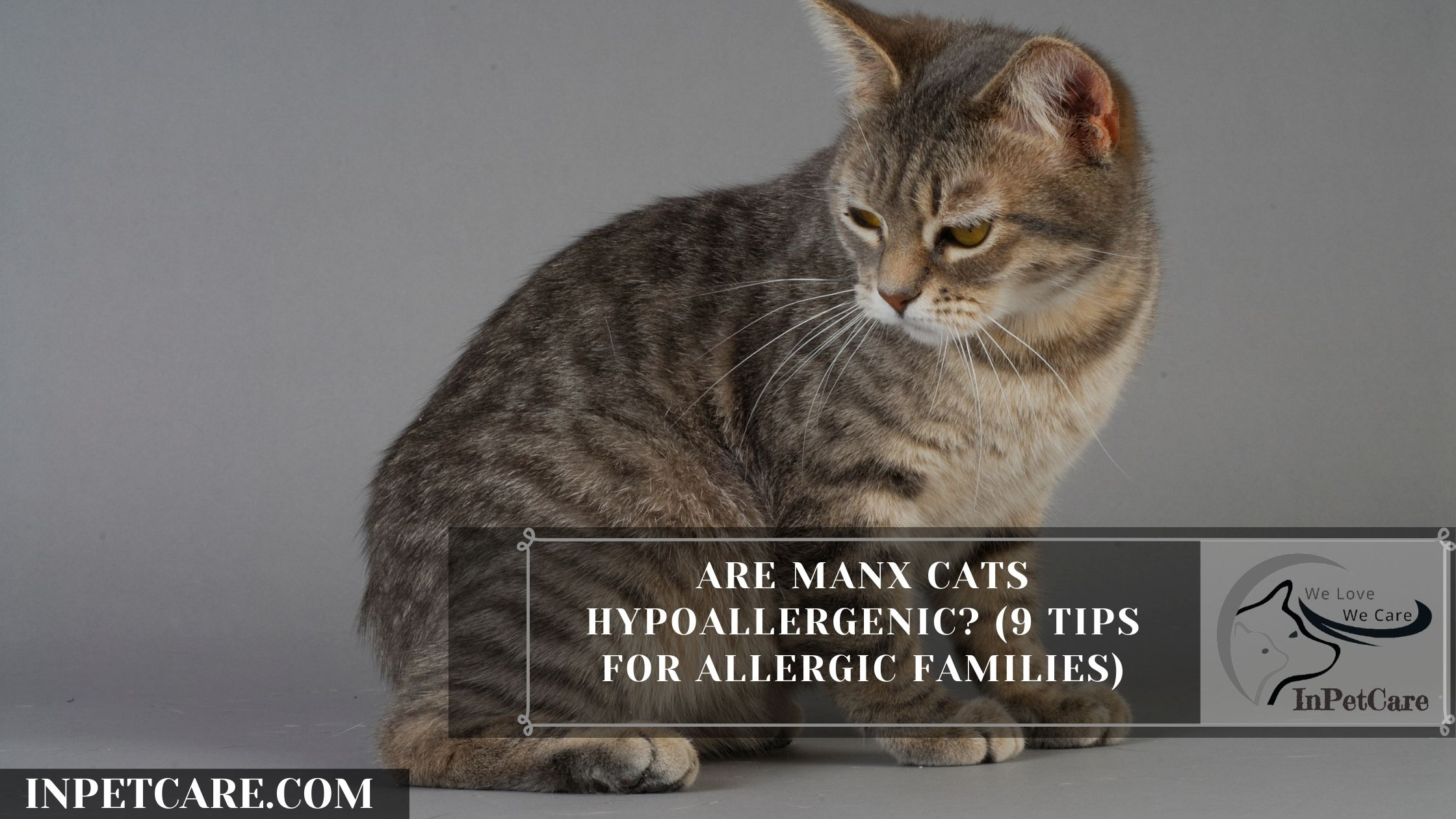Are Manx Cats Hypoallergenic? (9 Tips For Allergic Families)