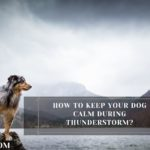 How To Keep Your Dog Calm During Thunderstorm?