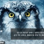 12 Cutest Owl Species (Cute Owl Breed Pictures)