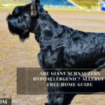 Are Giant Schnauzers Hypoallergenic? Allergy-Free Home Guide