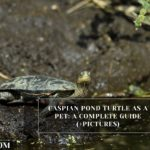 Caspian Pond Turtle As A Pet: A Complete Guide (+Pictures)