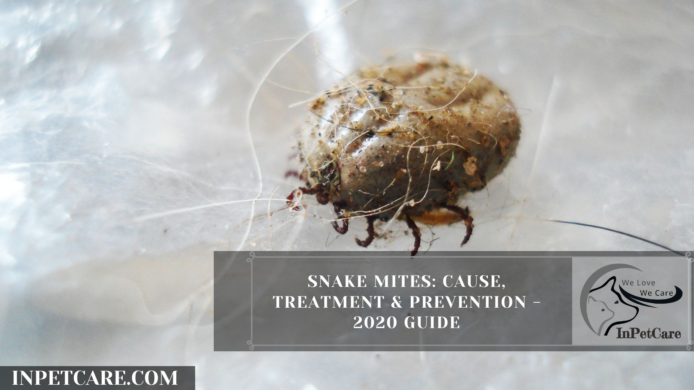 Snake Mites: Causes, Treatment and Prevention in 2021