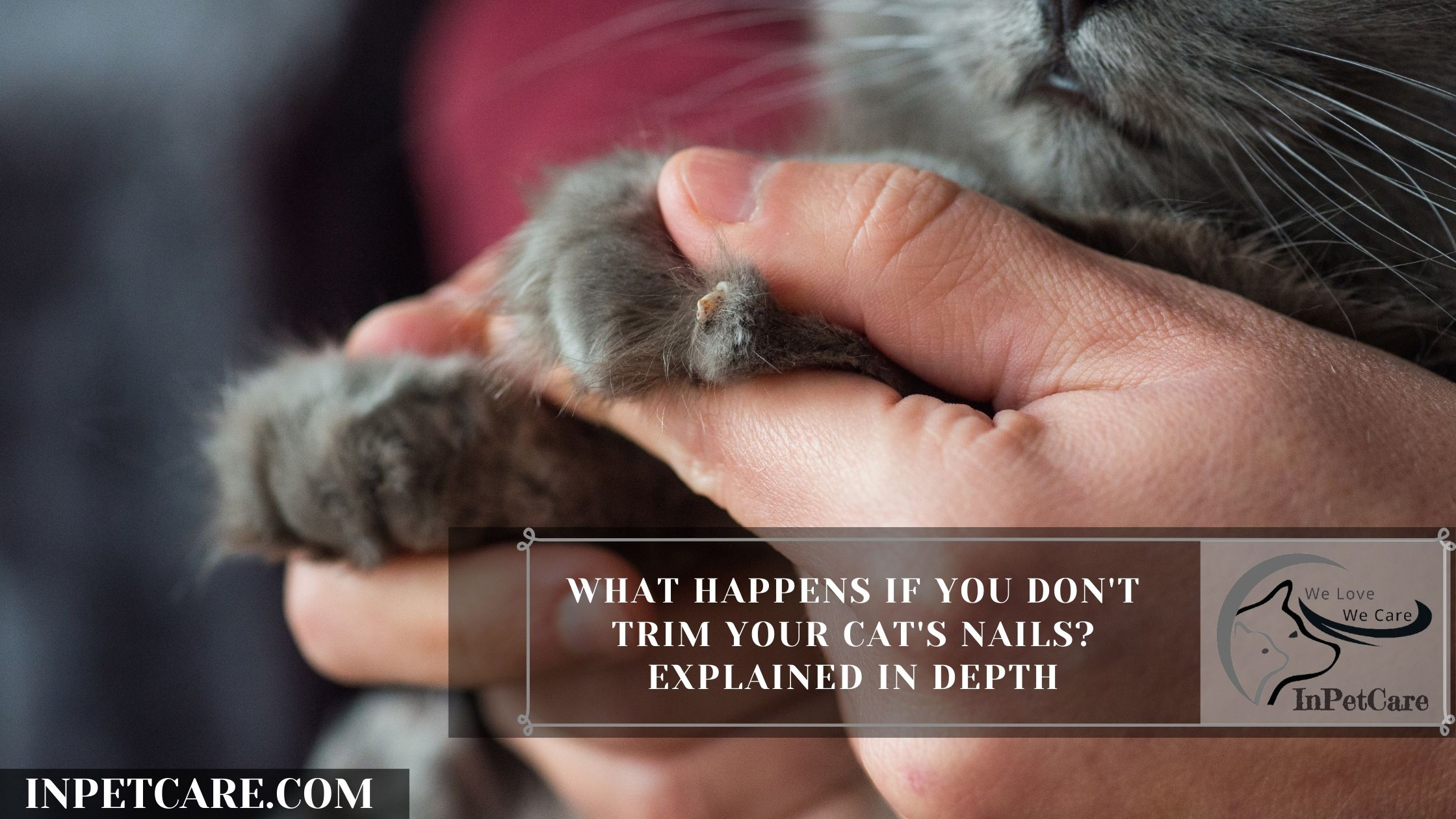 What Happens If You Don't Trim Your Cat's Nails? Explained In Depth