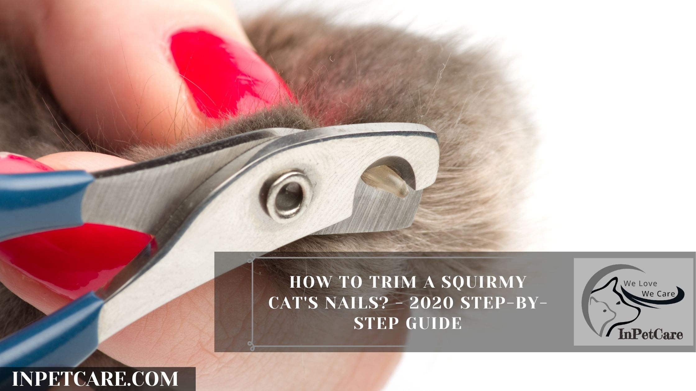 How to Trim a Squirmy Cat's Nails? A Complete Guide