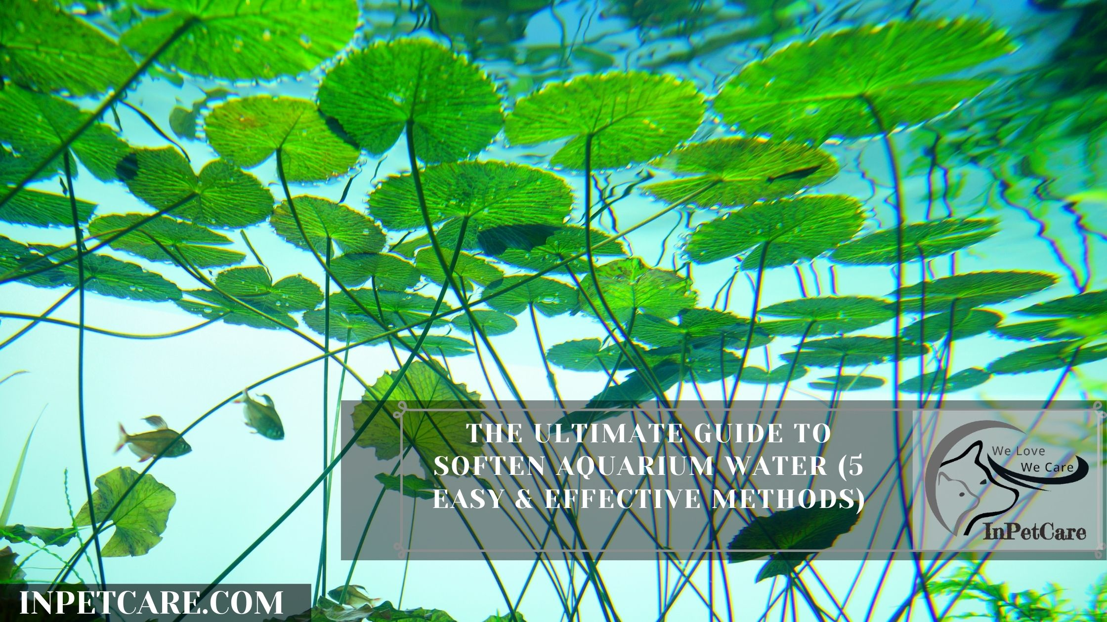 The Ultimate Guide To Soften Aquarium Water (5 Easy & Effective Methods)
