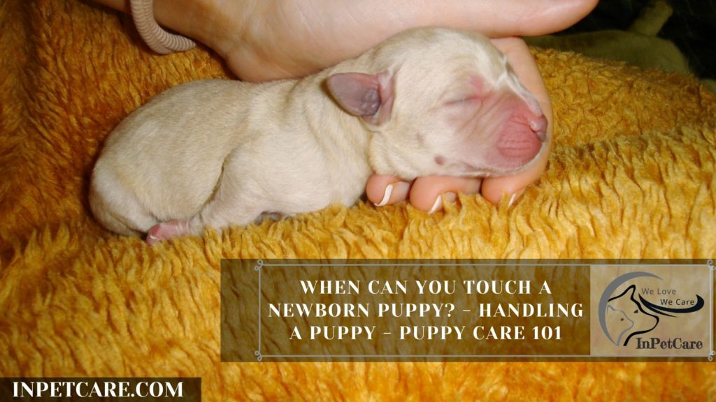 When Can You Touch A Newborn Puppy