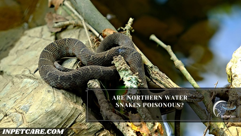 Are Northern Water Snakes Poisonous?