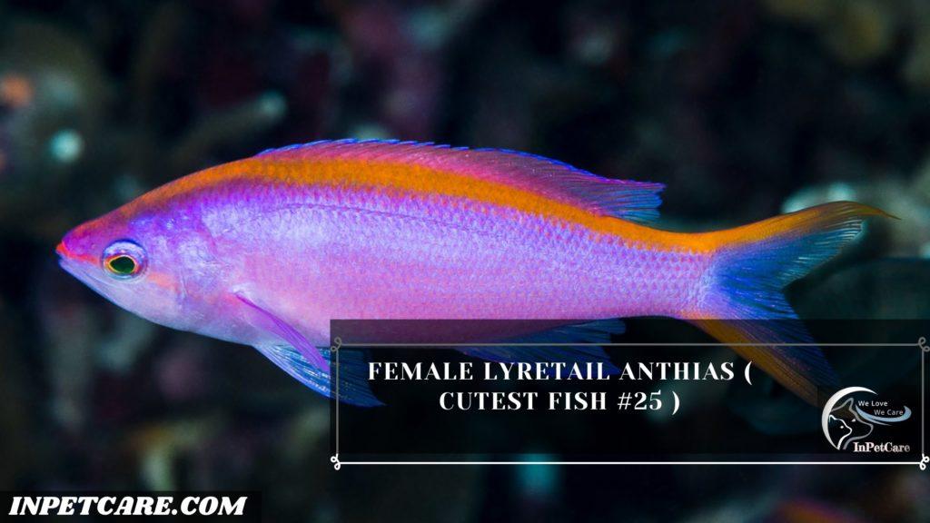 27 Cutest Fish For Aquarium (With Pictures)