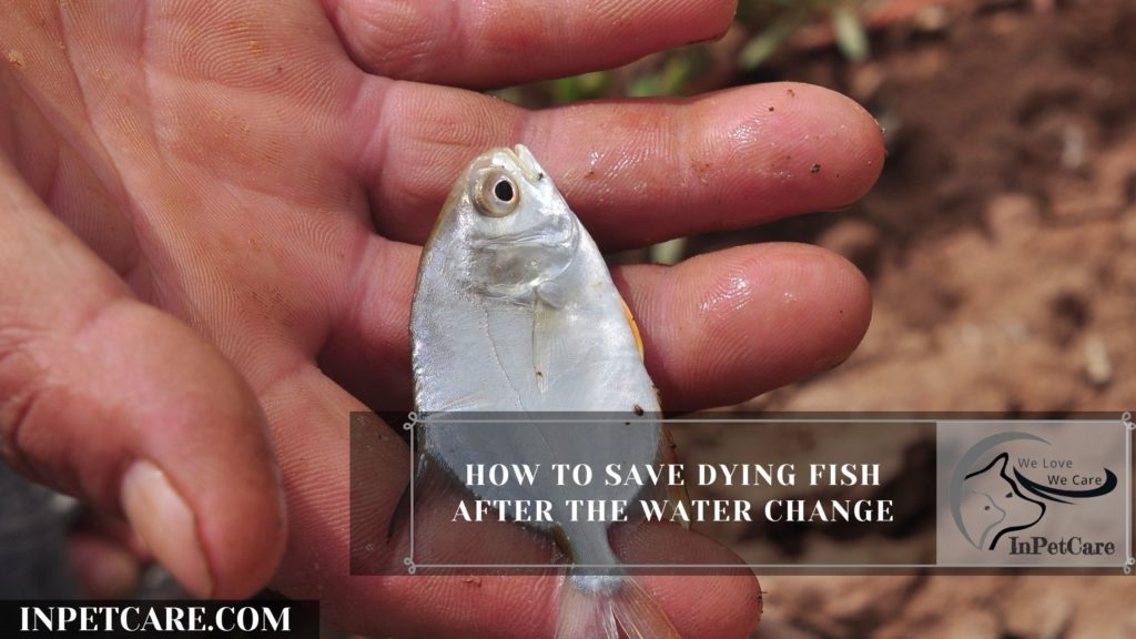 12 Tips To Save Dying Fish After A Water Change