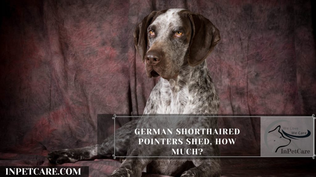 Are German Shorthaired Pointers Hypoallergenic? (+9Tips)