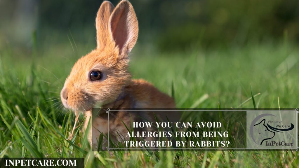 Are Rabbits Hypoallergenic? 9 Tips for Allergic Families