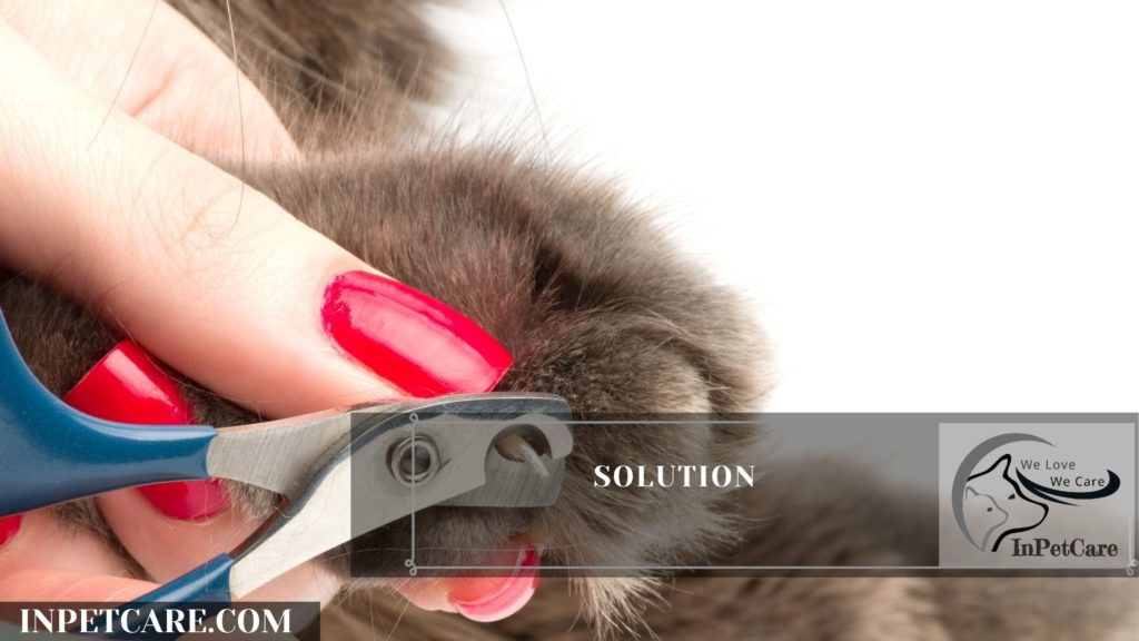 What Happens If You Don't Trim Your Cat's Nails? 9 Worst End
