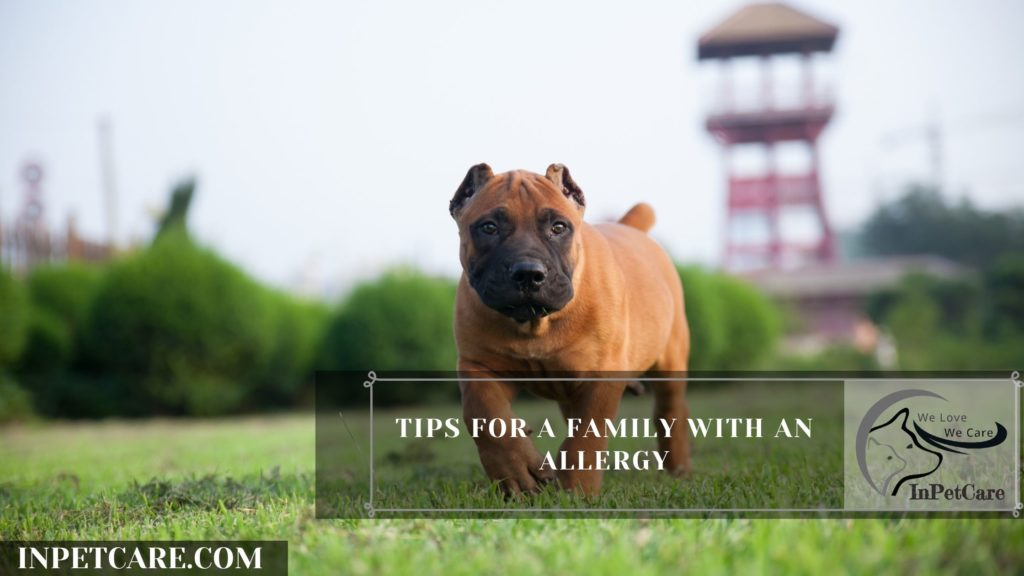 Are Hounds Hypoallergenic? Tips For Families With Allergies