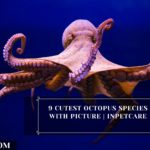 9 Cutest Octopus Species With Picture | InPetCare