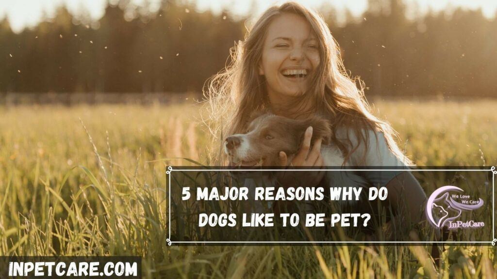 5 Major Reasons Why Do Dogs Like To Be Pet?