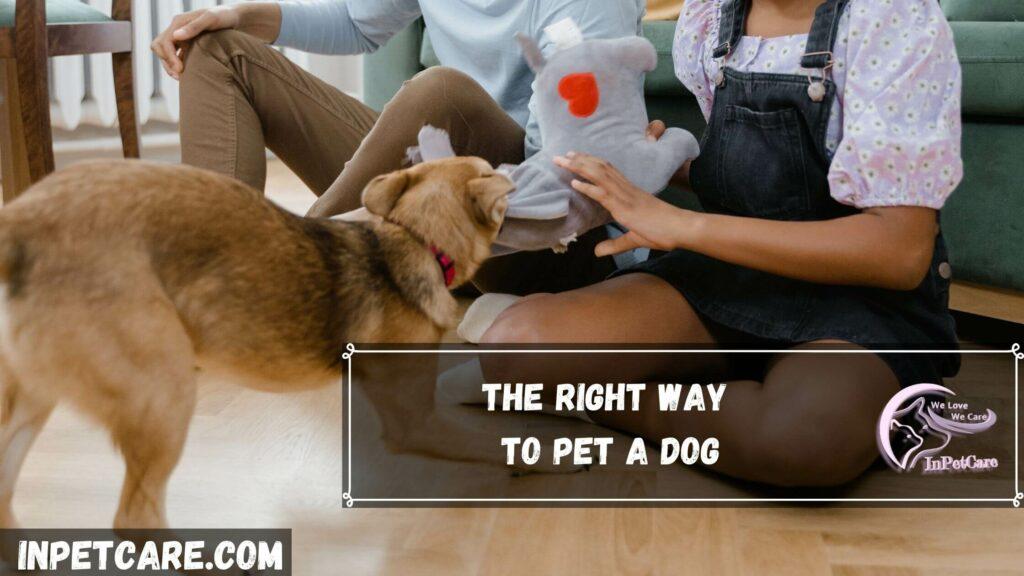 The right way to pet a dog