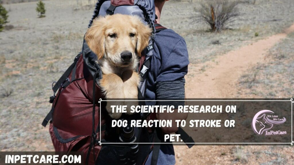 The scientific research on dog reaction to stroking or petting.