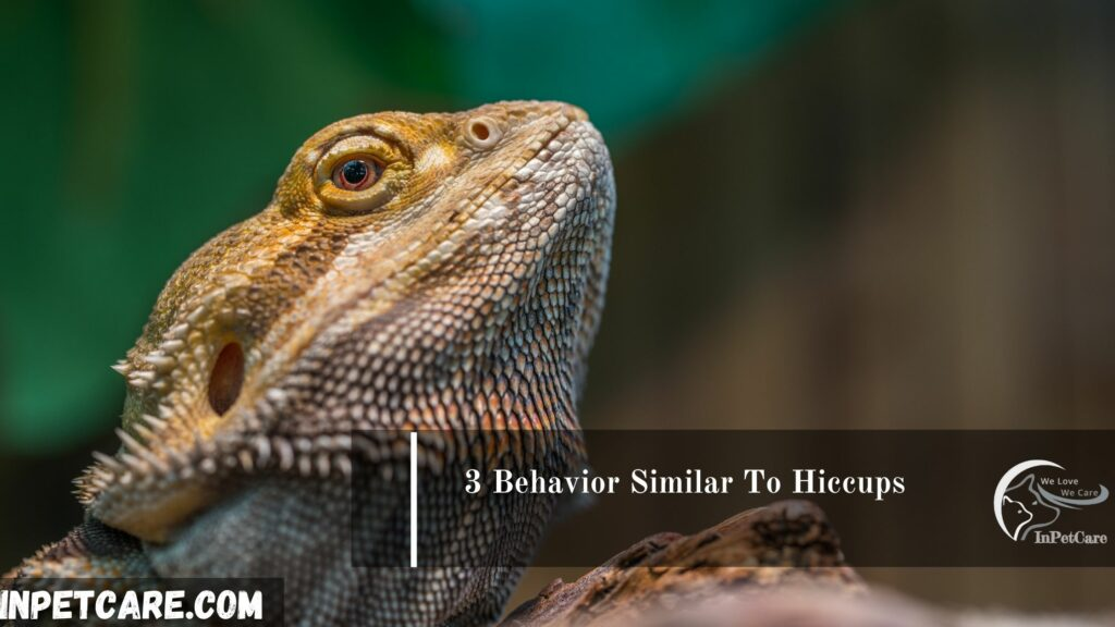 3 Behavior Similar To Hiccups