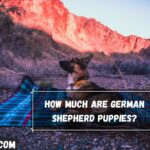 How Much Are German Shepherd Puppies?