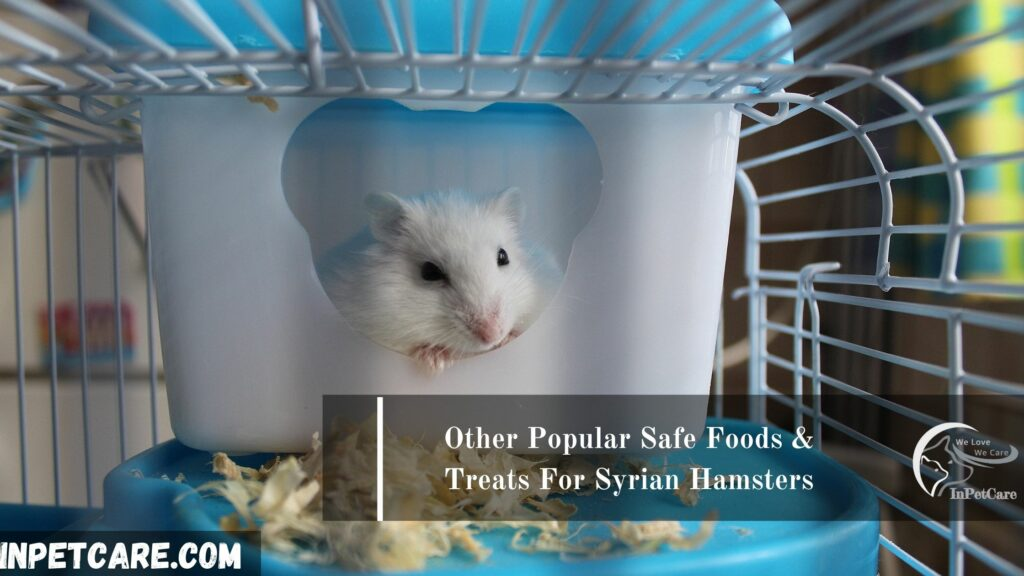 Other Popular Safe Foods & Treats For Syrian Hamsters