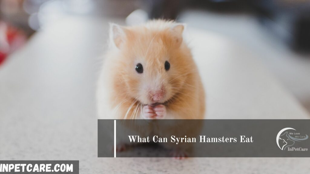 What Can Syrian Hamsters Eat?