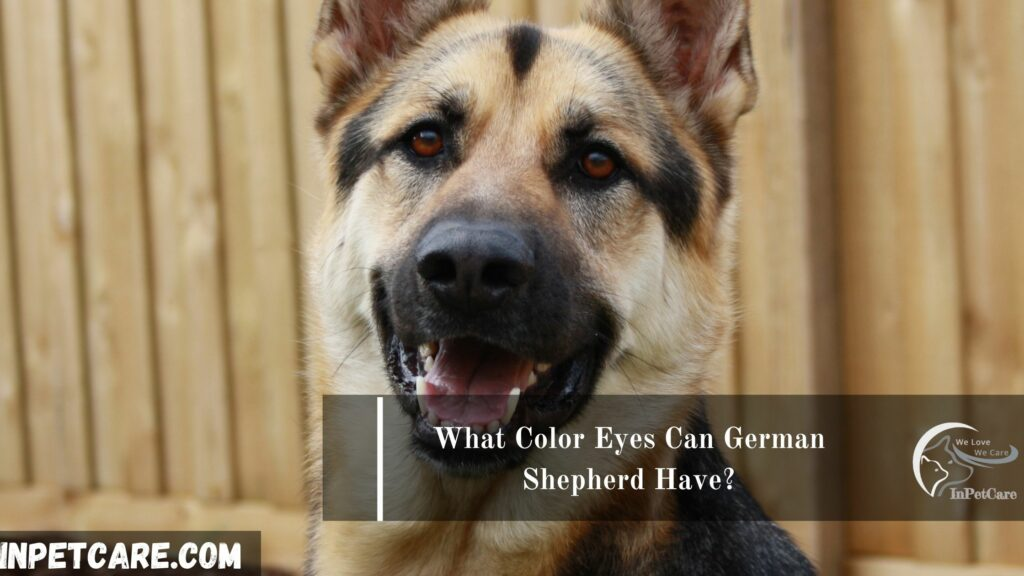 What Color Eyes Can German Shepherd Have?