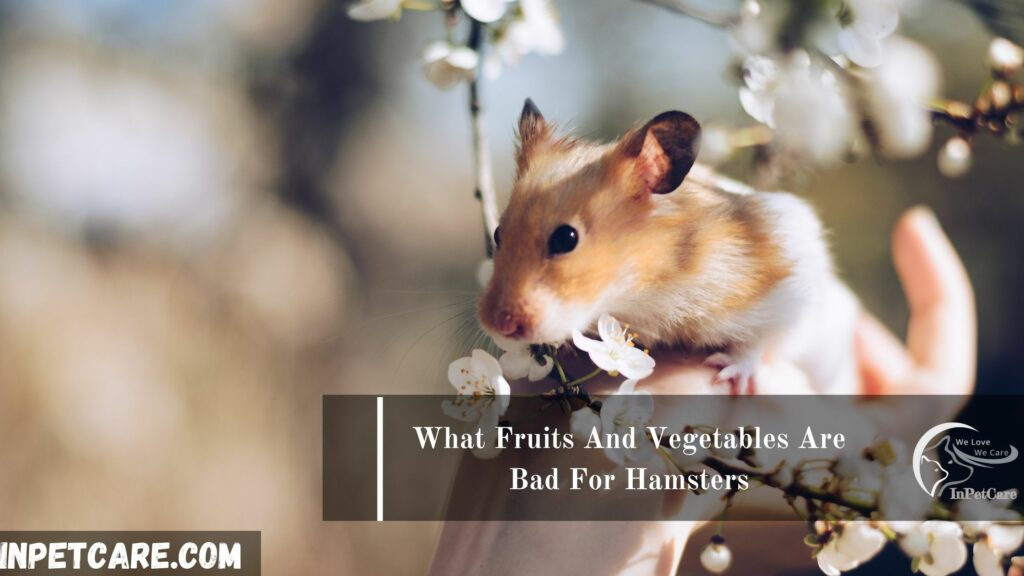 What Fruits And Vegetables Are Bad For Hamsters