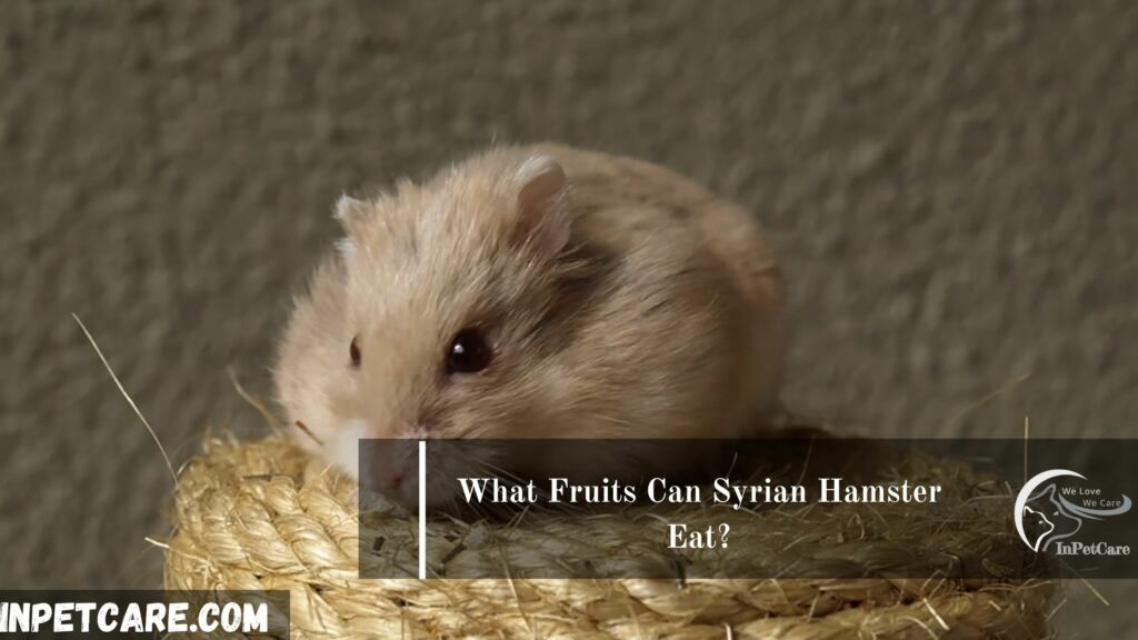 What Fruits Can Syrian Hamster Eat?