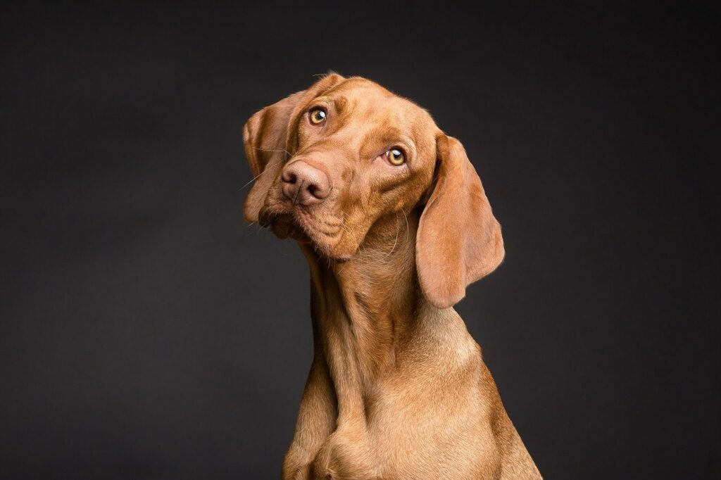 home-remedies-for-dogs-with-arthritis